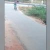 Кўзойнакли илон велосипедда кетаётган йўловчиларга ташланди (видео)