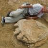 Гоби саҳросида улкан динозаврнинг оёқ изи топилди