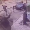 Полициячи юқори қаватдан тушиб кетган болани илиб олди (видео)