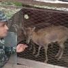 Surxondaryoliklar uyidan Qizil kitobga kiritilgan hayvonlar topildi