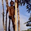 Папуа (Индонезия) да ажабтовур қабила — одамхўрлар қабиласи яшайди…