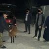 Samarqandda «Captiva»da qo'y o'g'irlagan shaxs ushlandi