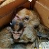 Bojxonachilar 7 bosh maymunning mamlakatdan yashirincha olib chiqishga bo'lgan urinishni fosh etdi