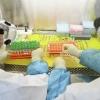 Хитойда коронавирусга қарши биринчи дори ишлаб чиқарила бошланди