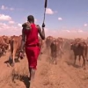 Кенияда чорвадор фермерлар сувлоқларни мобиль илова орқали топишмоқда (видео)