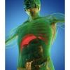 Рўзанинг танамизга таъсирини биласизми? (фото)