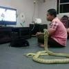 Осиёлик йигит уч метрлик кобрага уйланди!