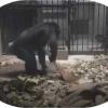 Maymun ham farroshning ishlarini bajardi