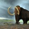 Arxeologlar ulkan mamont qoldiqlarini tiklashdi