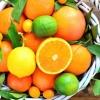 Apelsin, mandarin hamda limonning ko'z va xotiraga ta'siri qanday?