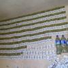 Surxondaryoda 800 dona gugurt qutisiga qadoqlangan «marixuana»ning muomalaga kiritilishi oldi olindi