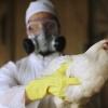 Bolgariyada parranda grippi avj olmoqda