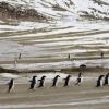Антарктидада рекорд даражадаги иссиқ ҳарорат қайд этилди