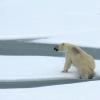 Гренландиядаги музликлар 30 йил олдингига қараганда етти маротаба тезроқ эришни бошлаган