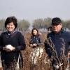 Андижон вилояти ҳокими дам олиш кунлари пахта терди (видео)