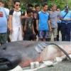 Филиппинда тўлқин фанга номаълум маҳлуқни соҳилга чиқариб ташлади