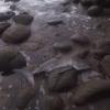 Акулага ёрдам берган одамзод (видео)