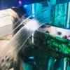 Moskvadagi savdo markazida hajmi 1 mln litrli akvarium darz ketdi