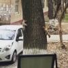 Тоҳир Содиқов Тошкентда қувлашмачоқ ўйнаётган олмахонларни видеога олди