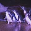 Marsda pingvinlar topildi