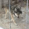 Бош прокуратура: Зоопарк раҳбарига «иш» очилди