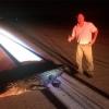 Флоридада аллигатор самолёт билан тўқнашди