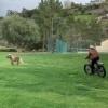 Шварценеггер велосипедда ўзининг понисини бадантарбия қилдирди (видео)