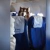 Самолётда йўловчи сифатида парвоз қилган катта ит машҳурликка эришди (видео)