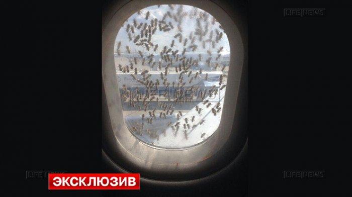 """Vnukovo aeroportida """"Aerobus"""" yo'lovchi samolyoti ustiga minglab asalarilar yopirildi"""