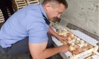 """""""Россельхознадзор"""" Ўзбекистонга 18 тонна мевани қайтариб юборди"""