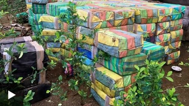 Колумбиядаги жунглида 5 тонна кокаин топилди