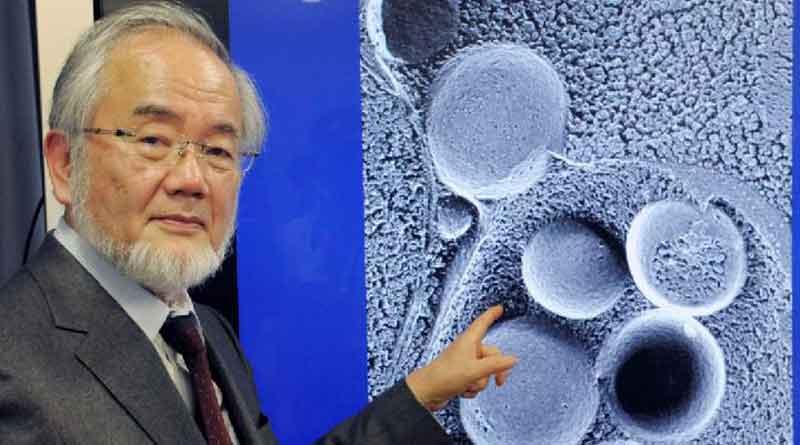 Нобель-2016 мукофоти номзоди рўза тутишнинг организмга фойдасини илмий исботлаб берди