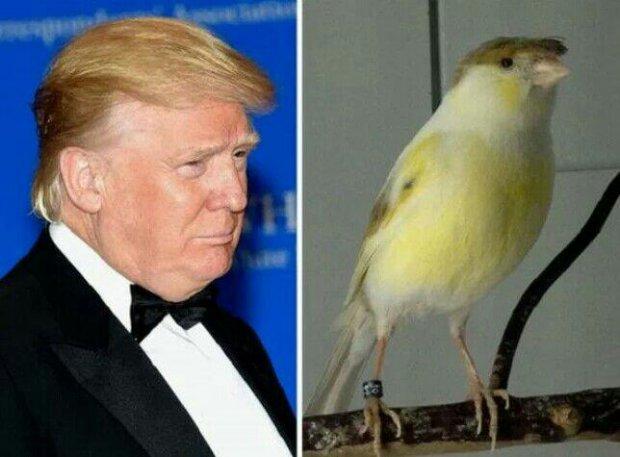 АҚШнинг янги Президенти Трампнинг дунёдаги ҳайвонот олами ва буюмлар орасидаги қиёфадошлари. Тасодифни қаранг!