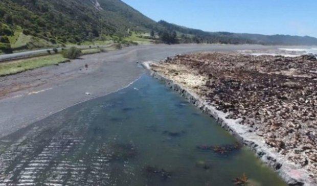 Янги Зеландиядаги зилзила сабабли океан туби қуруқликка айланиб қолди
