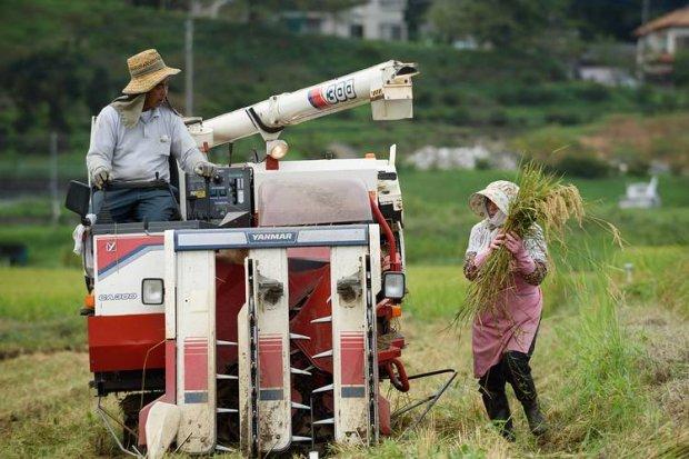 Япония мамлакат қишлоқ хўжалиги соҳасига хорижий ишчиларни жалб этади