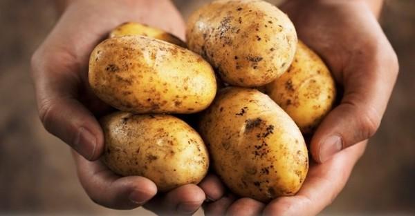 Бир йил давомида фақат картошка билан озиқланиш натижалари шифокорни ҳайратга солди