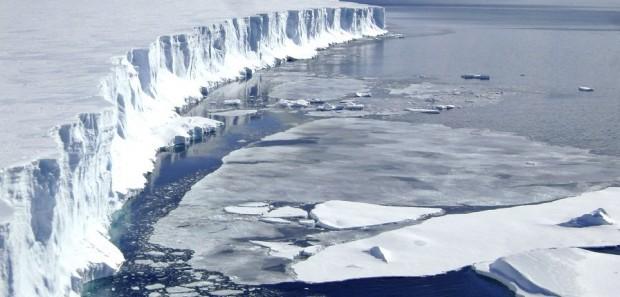 Olimlar Arktika faunasi va florasi o'zgarishi oqibatlaridan ogohlantirishdi