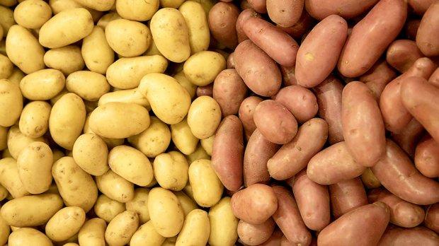 Президент Фармони: Энди картошка арзонлашиши мумкин
