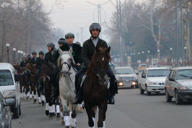 Қорабайир зотдор отлари Қашқадарёдан Тошкентгача юриб боради (фото)